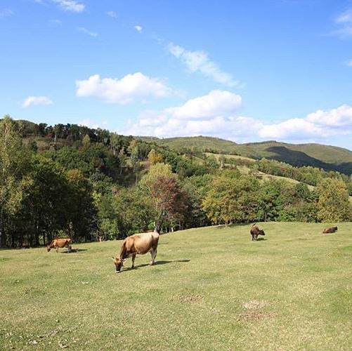 牧場の風景3