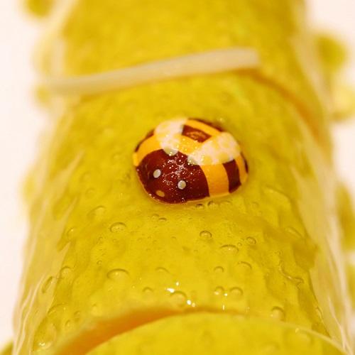 ヒルトン東京 マーブルラウンジのスイーツビュッフェ(蜂さんのチョコレート)