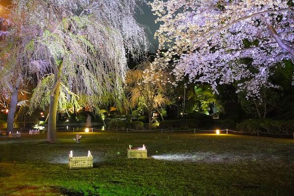 グランドプリンスホテル高輪 トリアノンのディナー|日本庭園